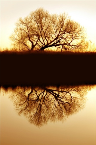 Riparian-Willow-Reflection-487611
