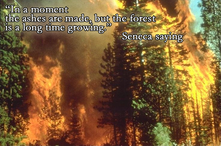 forest_Ashes_quote